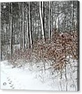 Nature In Winter Under Snow In Denmark Acrylic Print