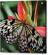 Nature's Treasures  Acrylic Print