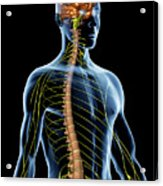 Nervous System Acrylic Print