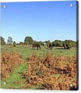 New Forest Acrylic Print