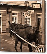 New Orleans - Bourbon Street Horse 3 Acrylic Print