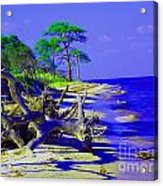 North Florida Beach Acrylic Print by Annette Allman