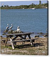Opening Day For Snook Fishing At Sebastian Inlet In Florida Acrylic Print