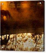 Orange Mist Acrylic Print