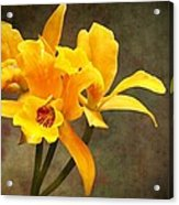 Orange Spotted Lip Cattleya Orchid Acrylic Print by Rudy Umans