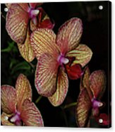 Orchid Quad Acrylic Print