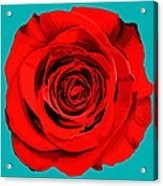 Painting Of Single Rose Acrylic Print
