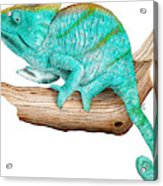 Parsons Chameleon Acrylic Print