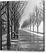 Path Through Fog Acrylic Print