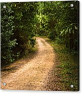 Pathway In The Woods Acrylic Print