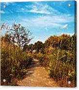 Pathway Through Colorful Fall Autumn Foliage Acrylic Print