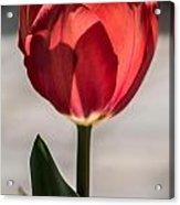 Petals And Sun Acrylic Print