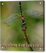 2 Peter 3 Verse 15 Acrylic Print