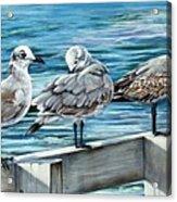 Pier Gulls Acrylic Print