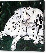 Playful Pups Acrylic Print
