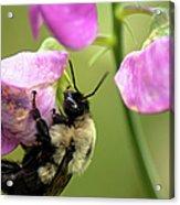 Pollination Nation V Acrylic Print