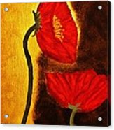 Poppy Ll Acrylic Print
