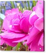 Pretty Pink Flower Acrylic Print