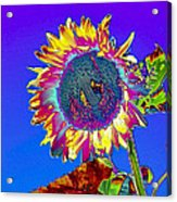 Psychedelic Sunflower Acrylic Print