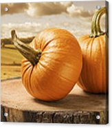 Pumpkins Acrylic Print by Amanda Elwell