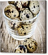 Quail Eggs Acrylic Print