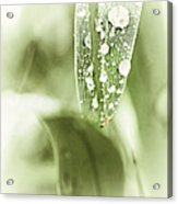 Raindrops On Grass Acrylic Print