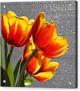 Red And Yellow Tulip's In A Window Acrylic Print by Robert D  Brozek