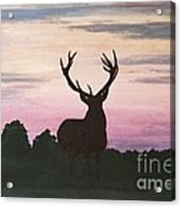 Red Stag At Dusk Acrylic Print