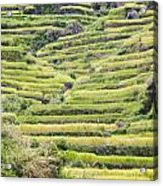 Rice Terraces Acrylic Print