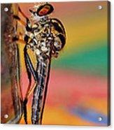 Robber Fly Acrylic Print
