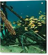 Safari Boat Wreckage And Aquatic Life In The Red Sea. Acrylic Print