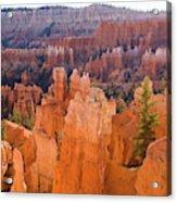 Sandstone Hoodoos Bryce Canyon  Acrylic Print