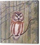 Saw Whet Owl Acrylic Print