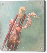 Sea Horses Acrylic Print by Angie Vogel