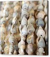 Sea Shell Decorations Acrylic Print