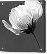 Simply Beautiful In Black And White Acrylic Print