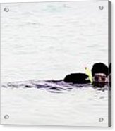 Snorkelling Sideways In The Lagoon Acrylic Print