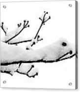 Snow Cover Acrylic Print