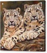 Snow Leopards Acrylic Print