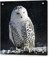 Snowy Owl On A Twilight Winter Night Acrylic Print