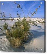 Soaptree Yucca In Gypsum Dunes White Acrylic Print