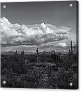 Sonoran Desert In Black And White  Acrylic Print