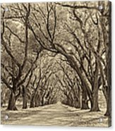 Southern Journey Sepia Acrylic Print