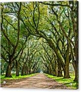 Southern Journey  Acrylic Print