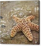Starfish On Beach Acrylic Print