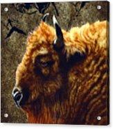 Stonebull Acrylic Print