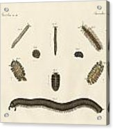 Strange Insects Acrylic Print