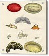 Strange Molluscs Acrylic Print