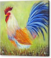 Strutting My Stuff, Rooster Acrylic Print