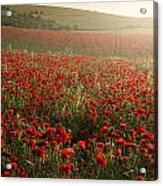 Stunning Poppy Field Landscape Under Summer Sunset Sky Acrylic Print